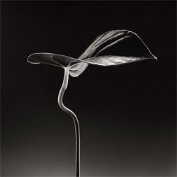 Beautiful botanical photography by James Thornbrook.
