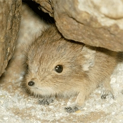 A tiny baby elephant shrew at the National Zoo. Just look at that face!