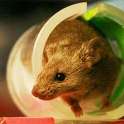 Could the future mean that you have an immune deficient mouse as your medical avatar?