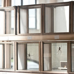 Thomas Maincent's Spiderfarm, a bio-factory to house spiders and harvest their silk.