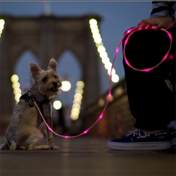 Pup Crawl, illuminated leashes to keep your pet safe.