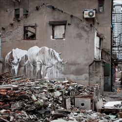 The taming of the beasts, beautiful rhino street art in Shanghai.