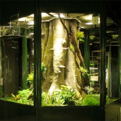 A look behind the scenes of the tree frog vivarium at the American Museum of Natural History from designer Roy Lorieo.