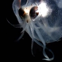 BBC's look at some incredible deep sea creatures, part of the Nature's Microworlds series.