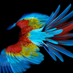 Perroquet, a beautiful series of photographs of parrots in flight by Sølve Sundsbø.