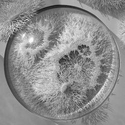 Outbreak, an incredible series of hand cut paper microbes by Rogan Brown.