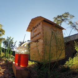 Honeyflow, a new take on the honeybee hive that allows you to collect and watch the honey flow from the hive!
