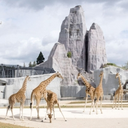 Bernard Tschumi and Jacqueline Osty's redesign of the Paris Zoo