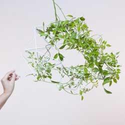 Parramyd system for plants by kawamura-ganjavian.