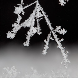 Biochemist Linden Gledhill's homegrown snow. Watch the snowflakes created in his homemade snowflake-growing machine.