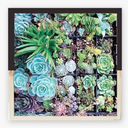 Shelterblack's Garden State Box, wall mountable planter frames for your succulents.