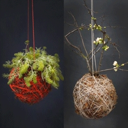 Interesting range of hanging planters from Mister Moss. One even holds a flowering quince!
