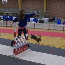 Rabbits sure can jump. Great clips from the Danish Rabbit Hopping Championships as rabbits compete in high jump, long jump and impressive series of jumps!