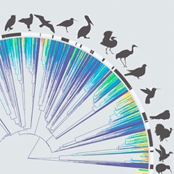 Researchers have produced the most comprehensive family tree for birds to date, connecting all living bird species — that's nearly 10,000 in total!
