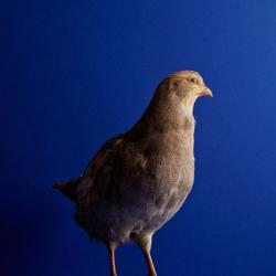 The Bird's Odyssey, great series by Gustav Almestål for The Gourmand.