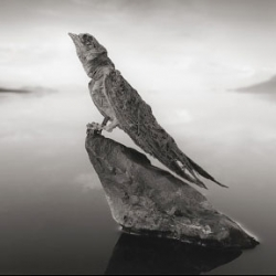 Incredible photos from Nick Brandt of Lake Natron in northern Tanzania. The photos feature in his latest book Across the Ravaged Land, documenting the disappearance of animals in Eastern Africa.