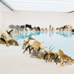 Cai Guo-Qiang's stunning exhibition at the Queensland Art Gallery | Gallery of Modern Art.