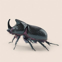 Vincent Fournier's Post Natural History explores the ideas of technologically enhanced wildlife, like a GPS tracking rhinoceros beetle and robotic jellyfish drone for transporting freshwater.