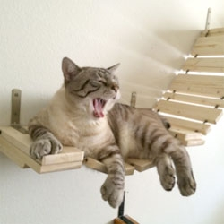 Furniture for cats from Portland based CatastrophiCreations.