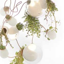 The 38 series Planter Chandelier by Omer Arbel.