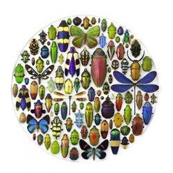 Pheremone, artistic arrangements of beautiful natural history objects by Christopher Marley.