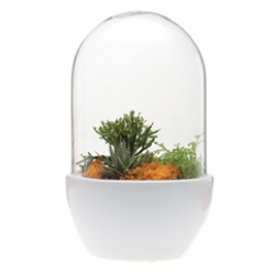 Love the terrarium collections from Chive that include a beautiful hanging range and pill terrariums like these.