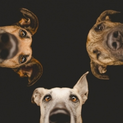 Beautiful dog portraits by Elke Vogelsang in a series titled 'All Good Dogs'.