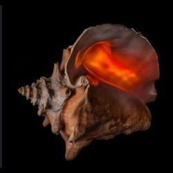Bill Gracey's beautiful photos of shells.
