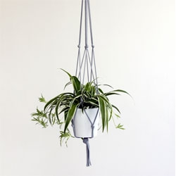 Knotted Interiors by Eleanor Bolton, a series of hanging planters made from rope.