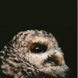 "Photographer Traer Scott's new book ""Nocturne: Creatures Of The Night"" featuring a host of nocturnal animals."