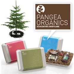 Pangea Organics ~ plant the holiday packaging and grow a SPRUCE TREE! Oh, and they are also offering you a 50% discount (friends & family, but you're friends now!)