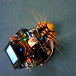 The Shrewbot, a whiskered robot developed by the Bristol Robotics Laboratory in conjunction with the University of Sheffield's Active Touch Laboratory.