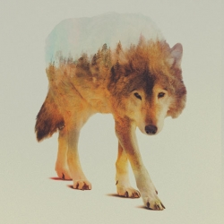 Lovely double exposures of animals and their habitats by Andreas Lie.