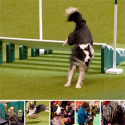 Four days and over 25,000 dogs! We visit the world's largest dog show, Crufts on Gun Dog day, celebrating all things canine with events from flyball and agility to Gameskeeper rings for working gun dogs.