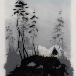 Nothing like a print of a cold, creepy, yet beautiful forest to brighten up your day. Brooks Salzwedel at Nucleus gallery.