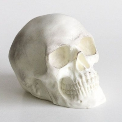 White chocolate skull by the Frosted Petticoat.  Skull is dusted in edible shimmer.