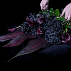 This Valentine's Day The Kraken Rum are opening a pop up florist selling only black roses