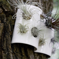 Pigeon Toe released these new air plant wall tiles - living art on your walls!