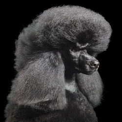 This is Alan, one of dozens of canines photographed by Tim Flach for his new book Dogs.
