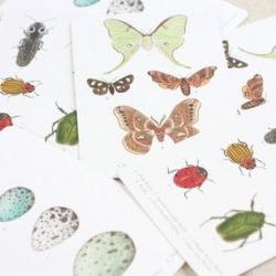 Alice Cantrell makes some gorgeous cards with insects and other natural inspirations.