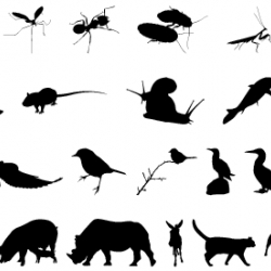 oooh...well spotted swissmiss.  how gorgeous are these animal silhouettes?  a must have FREE font.