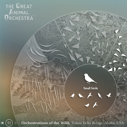 The Great Animal Orchestra - explore the soundscapes of the world, from the Yukon Delta National Wildlife Refuge, Alaska, United States to Acoustic Niches, Gonarezhou, Zimbabwe and beyond.