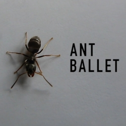 Designer Ollie Palmer has spent two years studying control systems and insect navigation in a bid to develop a machine that makes ants move in a choreographed fashion, dubbed the Ant Ballet.