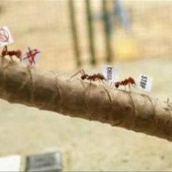 Ant Protest - Tired of being victims of an insecticide, these ants started a protest rally in a very funny and original viral video from Brazil.