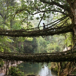 For the last 500 years, the locals of Nongriat in Meghalaya, India have grown several hundred bridges across the region's numerous water channels, using just the roots of local rubber trees.