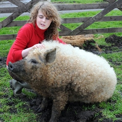 But it's not just her tail that's curly. Elizabeth is a queen of her species - a rare Austrian Mangalitza Gilt - and one of only a handful to thrive in Britain. This is the real deal, no photoshop involved!