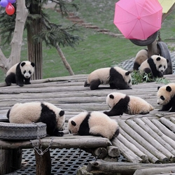 Wolong National Nature Reserve, south west China–