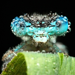 Amazing shots of sleeping bugs covered in water droplets by Miroslaw Swietek.