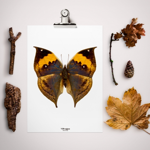 Feel the nature in your home with Villveggen prints. A collection of more than 20 posters of  butterflies and beetles. All designed and produced in Barcelona.