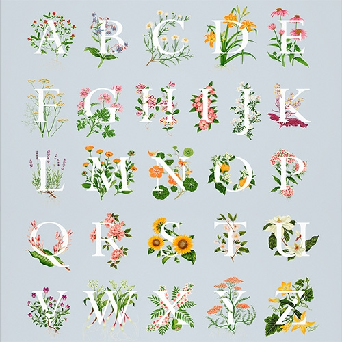 An Edible A-Z of Flowers by Charlotte Day.